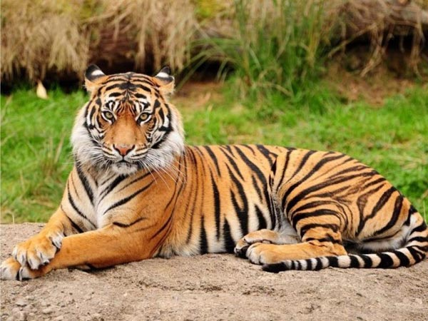 Jim Corbett National Park Short Tour