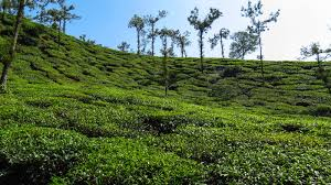 Banglore Mysore Coorg Wayanad Package