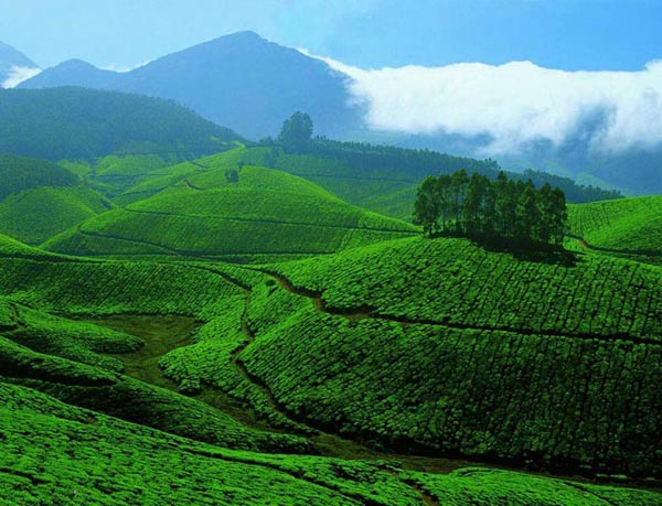 Kerala Hillstation And Houseboat Package