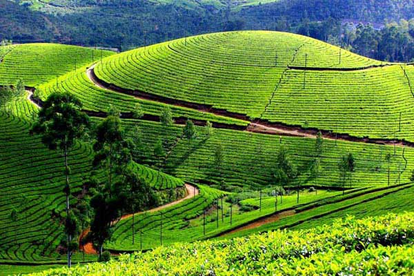 Kerala Hillstation Package