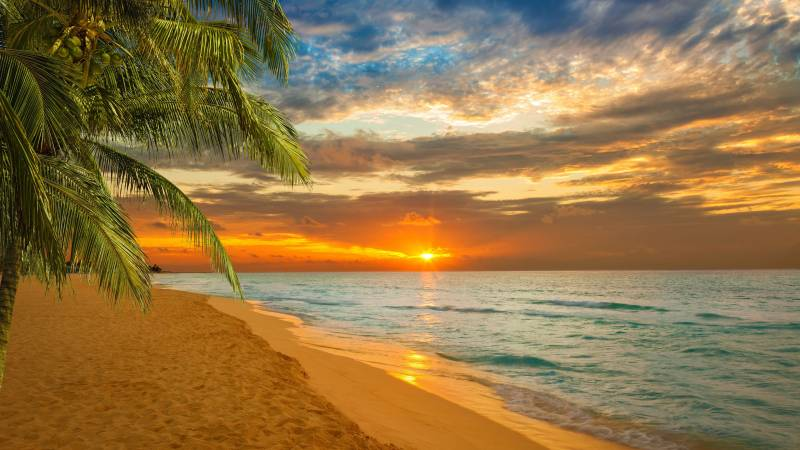 Paradise Tour Package