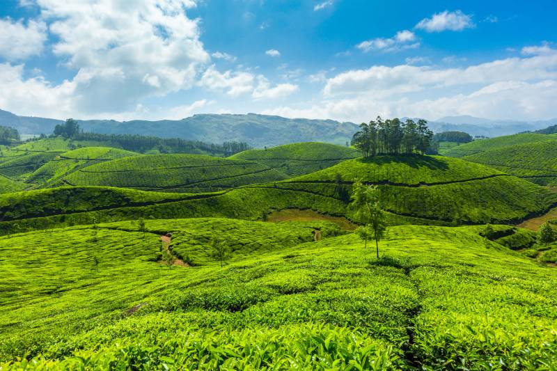 Incredible Kerala Tour