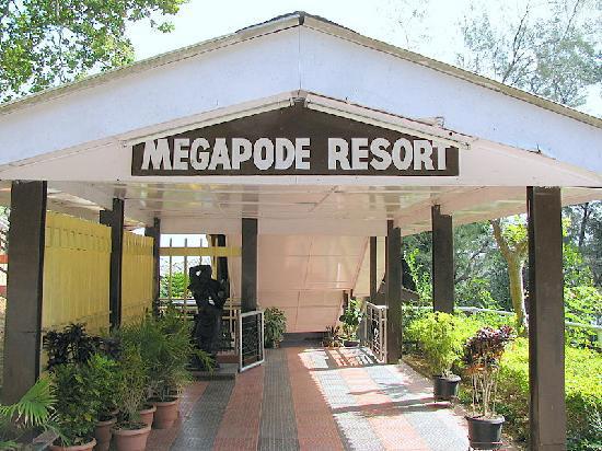 Megapode Nest, Port Blair