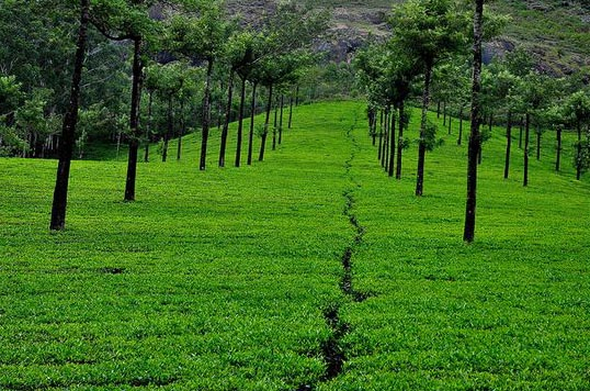 Kerala The Green Planet Tour