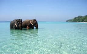 Port Blair - Havelock - Baratang Island Tour