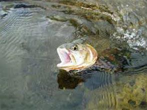 Kashmir Fishing Tour Package