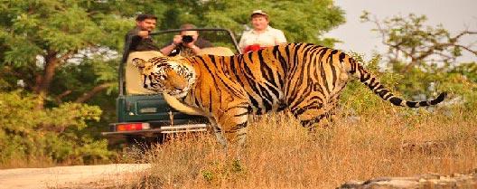 Tiger Trail Circuit by Semi Luxury Tourist Train