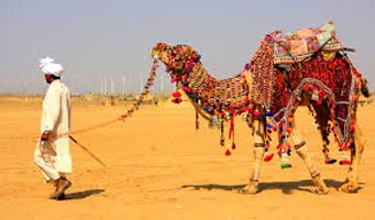 Camel Safari Tour packages