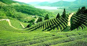 Simply Darjeeling Tour