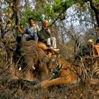 Madhya Pradesh Wildlife Tour