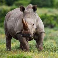 Tiger and Rhino Tour