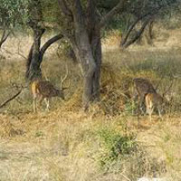 Golden Triangle Tour with Wildlife