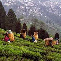 Sikkim & Darjeeling Tour