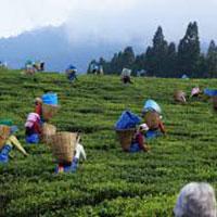 Valley Tour Of Assam