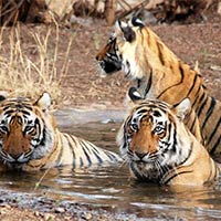 Gujarat Wildlife Tour - II