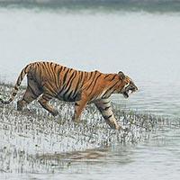Sundarbans Forest Tour