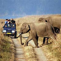 Corbett Adventure Tour