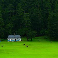 Delights of Himachal Tour
