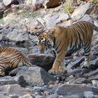 Classic India Wildlife Tours