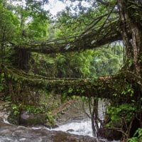 Nature Trail & Wildlife of Meghalaya Tour