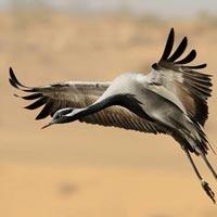 Bird Watching Tour of Rajasthan
