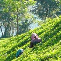 Munnar Tea Tasting & National Park Tour