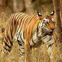 Wildlife Tour of Maharashtra