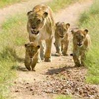 Wildlife and Heritage of Gujarat Tour