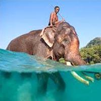 Funtastic Andaman Tour