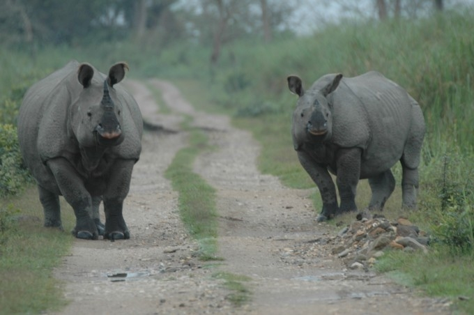 Home of Big Five Tour Package