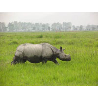 Tiger & Rhino Tour