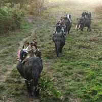 Nagaland Tour for Hornbill Festival