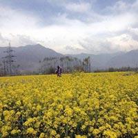 agriculture-jammu-and-kashmir