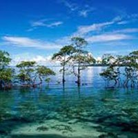 Five Day Tour (South Andaman)