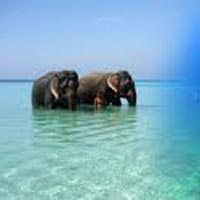 Magic of Andaman 4N/5D (Summer Special) Tour