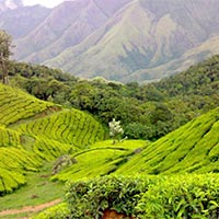 Kerala 2** Standard Tour