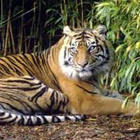 Wildlife Tiger Tour