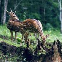 Kerala with Periyar Wildlife Tour