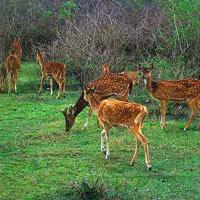Mysore - Ooty - Bandipur Tour