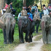Unexplored Wildlife Trip Of Kaziranga National Park Assam