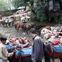 Shimla - Manali - Dharamshala - Dalhousie - Katra Tour Himachal