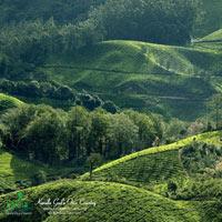 Nepal - Darjeeling - Puri Tour