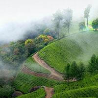 Nepal - Darjeeling - Sikkim Tour