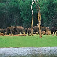 Cool Paradise Of Kerala Tour