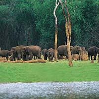 Cool Paradise Of Kerala Tour