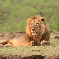 Adventurous Gujarat With Rann of Kutch Tour