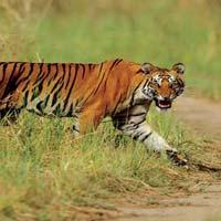 Wildlife & Hills of Uttarakhand Tour