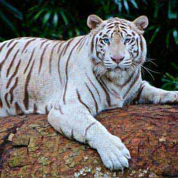 Land Of Royal Bengal Tiger 2N/3D Package
