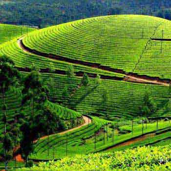 Amazing Darjeeling 4N/5D Package