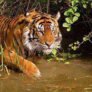 Kolkata Culture With Wild Safari 5N/6D Package